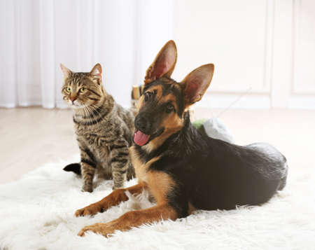 Cute cat and funny dog on carpet Foto de archivo