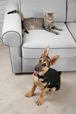 Cute cat and funny dog in living room Foto de archivo