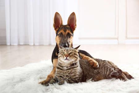 Cute cat and funny dog on carpet Foto de archivo
