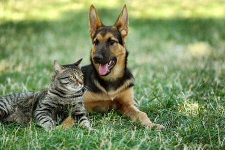 Cute dog and cat on green grass Banque d'images