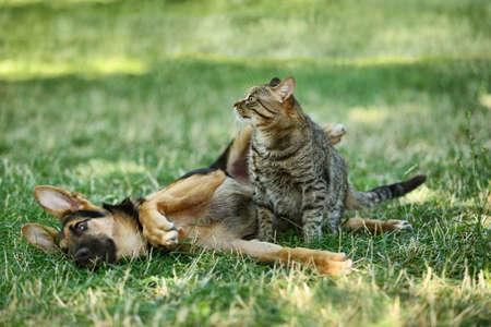 Cute dog and cat on green grass Zdjęcie Seryjne