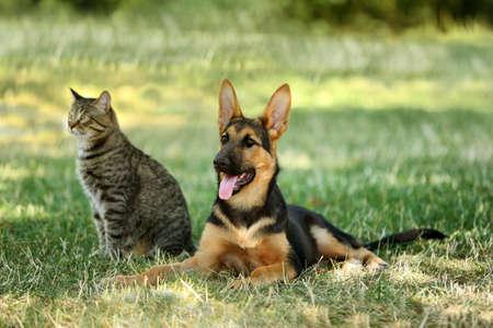 Leuke hond en kat op groen gras Stockfoto - 96162491