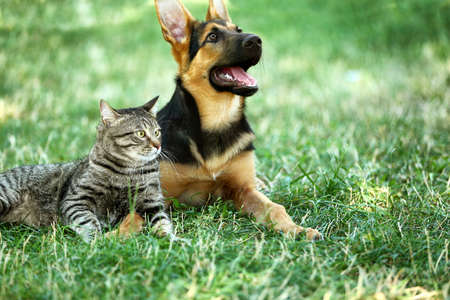 Cute dog and cat on green grass Stockfoto