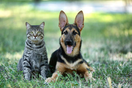Cute dog and cat on green grass Фото со стока