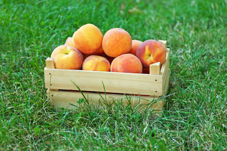 Box of fresh peaches on a green grass