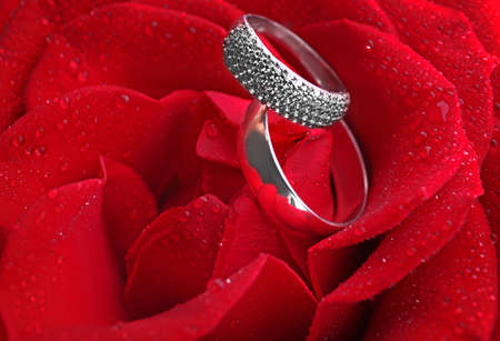 Two wedding rings in red rose Stock Photo