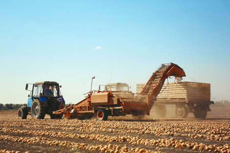 Onion harvesting with modern agricultural equipment in field