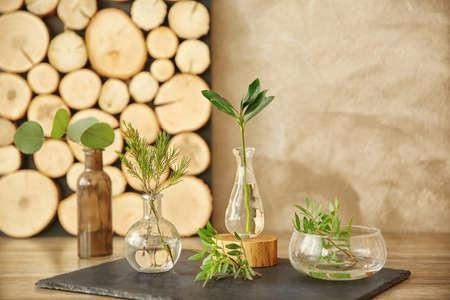 Plantas en diferentes floreros de vidrio en la mesa en la habitación Foto de archivo - 97109706
