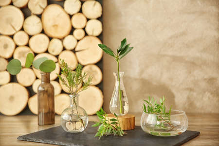 Plants in different glass vases on table in the room