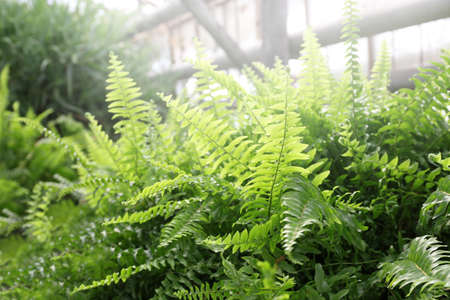 Close up view of ferns in greenhouse Reklamní fotografie