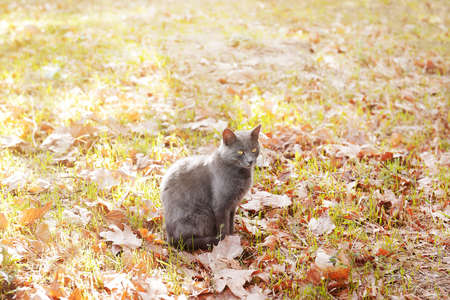 Cute cat in park Stock Photo