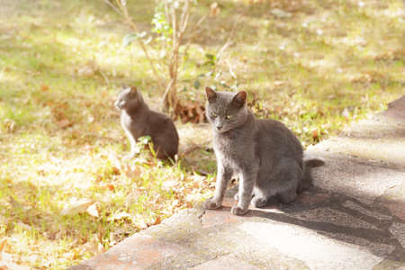 Cute cats in park Stock Photo