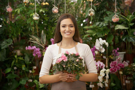 Pretty young florist holding pot with azalea in greenhouse Stock Photo