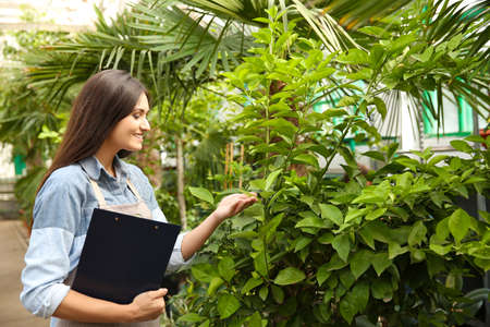 Pretty young florist with clipboard in greenhouse Stock Photo