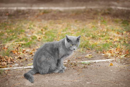 Cute cat sitting on pathway in park