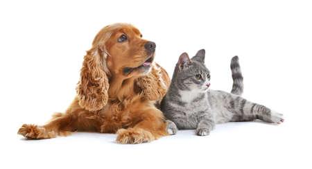 perro lindo y gato juntos en el fondo blanco