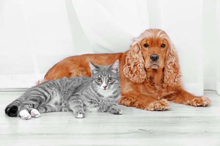 Cute dog and cat together at home