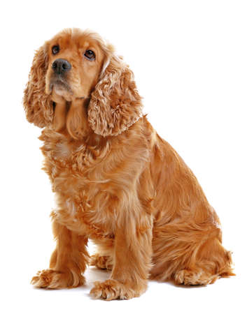 Adorable dog on white background