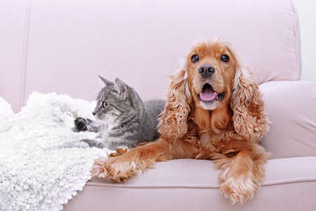 Cute dog and cat together on couch at home