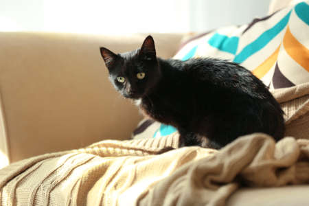 Cute black cat sitting on sofa at home