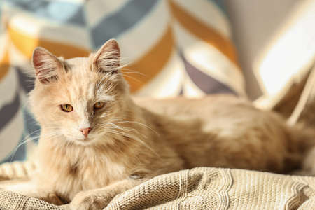 Cute cat lying on beige plaid at home Stock Photo