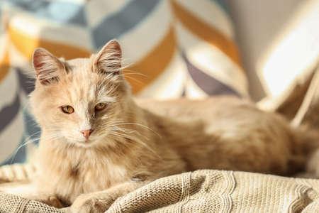 Cute cat lying on beige plaid at home Stock fotó