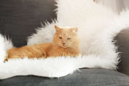 Cute cat lying on white fluffy plaid at home Stock Photo