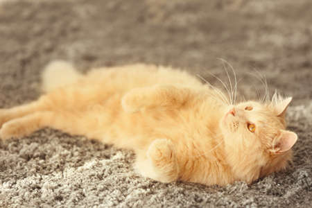 Cute funny cat lying on carpet at home