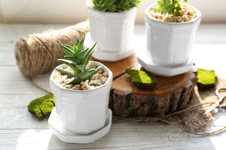 Beautiful houseplant in pot on white wooden table, closeup