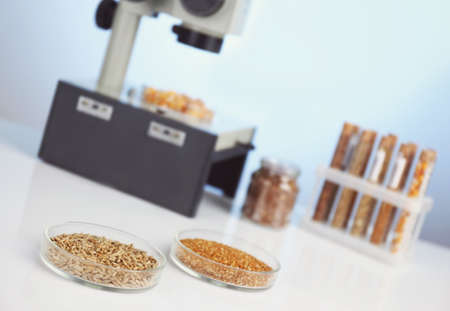 Food laboratory. Test for pesticides in seeds of agricultural plants Stock Photo