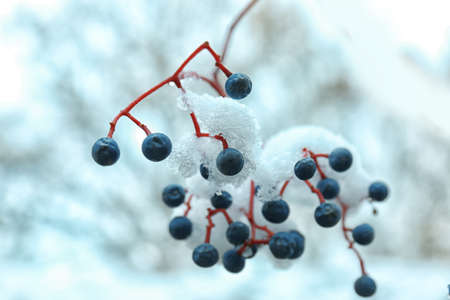 Close up view of branch covered with snow Stock Photo