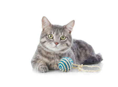 Cute funny cat with toy on white background