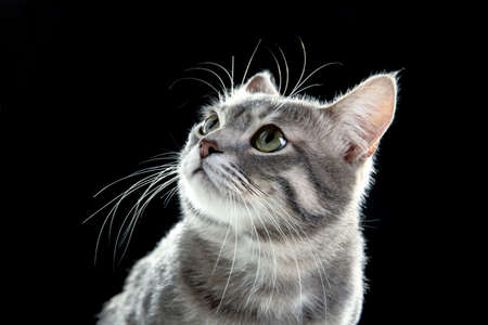 Portrait of cute funny cat on dark background Stock Photo