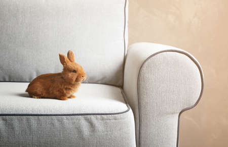 Cute red bunny sitting on light armchair