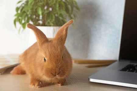 Cute red bunny sitting near laptop
