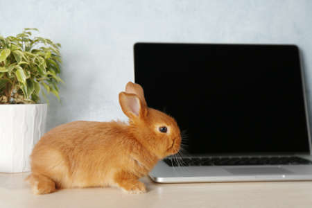 Cute red bunny sitting near laptop