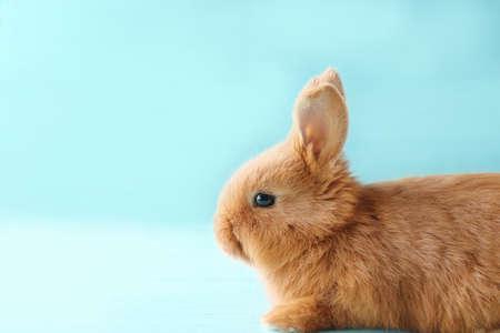 Cute fluffy bunny on blue background