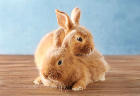 Two cute rabbits on wooden floor
