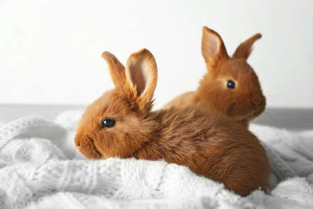Two cute fluffy bunnies on white blanket