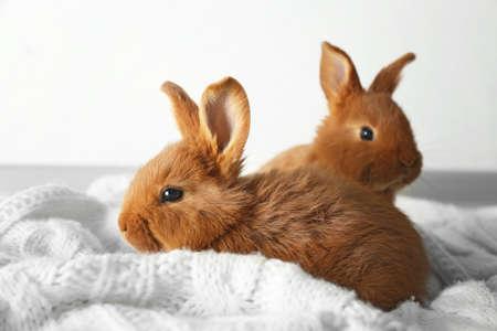 deux lapins mignons mignons sur une couverture blanche Banque d'images