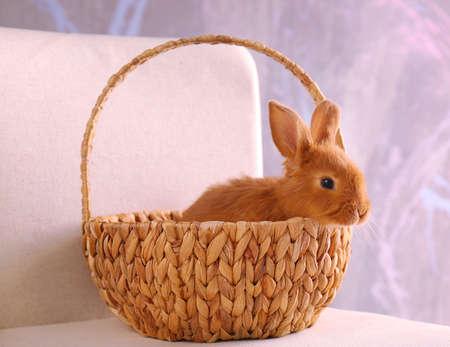 Cute funny rabbit in wicker basket, closeup