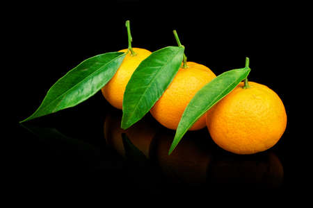 Three fresh tangerines with leaves on black background