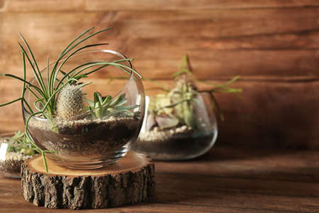 Glass pots with succulents on wooden background