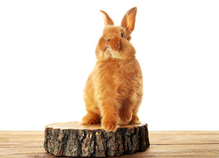 Cute fluffy rabbit on stump and white background Stock Photo