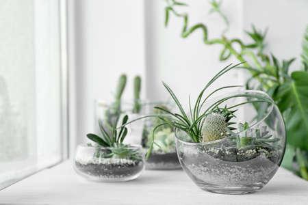 Mini succulent garden in glass terrarium on windowsill
