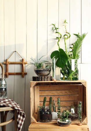 Decorative Glass Vases With Succulent And Cactus Plants In Interior