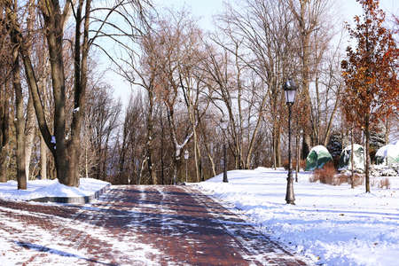 Alley in beautiful park on winter day Stock Photo