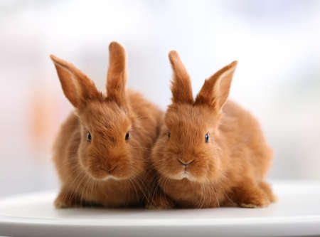 Cute funny rabbits on table at home Stock Photo