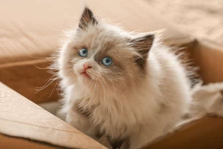 Cute little kitten in cardboard box, closeup
