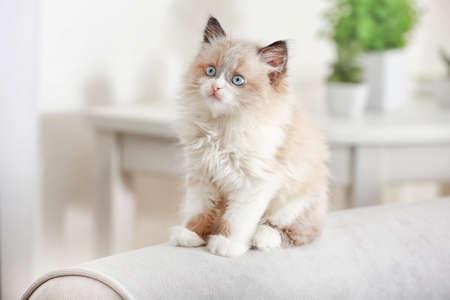 Cute little kitten on sofa at home